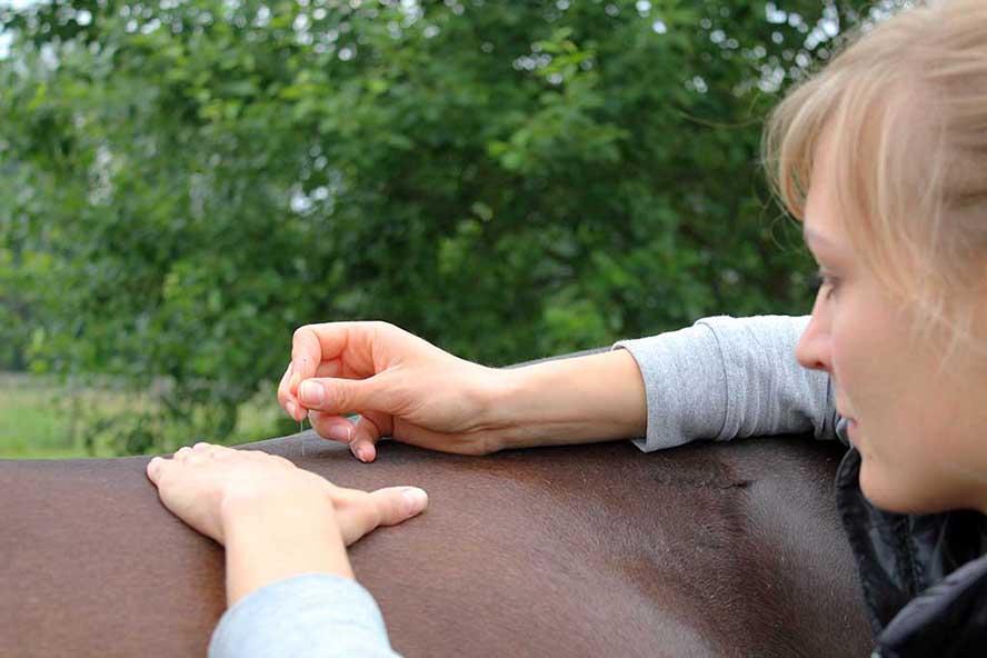 Animals Health Kontakt